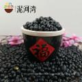 Gut ausgewählte kleine schwarze Bohnen mit Farbe poliert