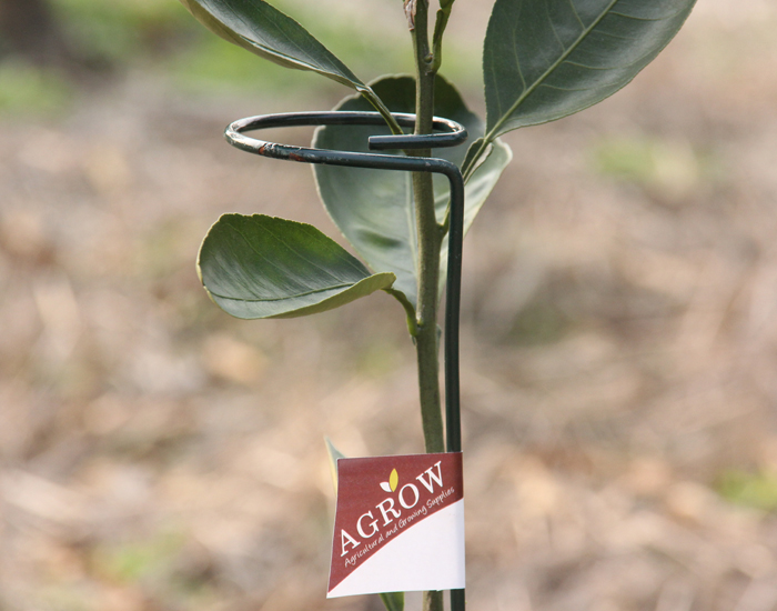 Single Stem Plant Supports