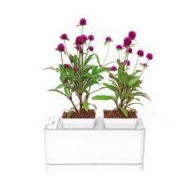 Mocle Indoor Flower Pot Crescer Sistema