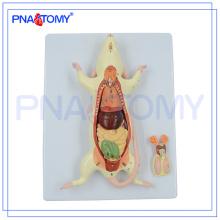 PNT-0821 alta qualidade anatomia animal 6-peças rat rato modelo