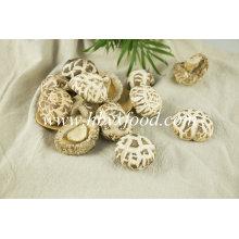 Cogumelos comestíveis comestíveis 4-5cm secos cogumelos de flor branca