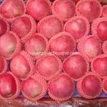 Fresh fruit red star apple