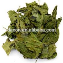 hojas secas de morera