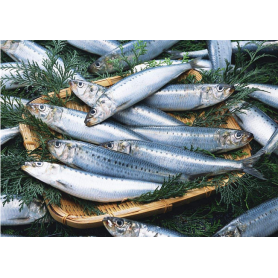 Whole Round Frozen Sardine