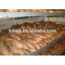 Mercado europeu venda quente batata doce
