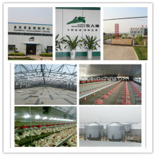 Automatic Poultry Equipment of Ventilation System