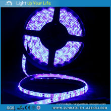 LED Strip Light Intdoor Use 3528 IP44 100m/Roll 12V Double Faced Adhesive Tape