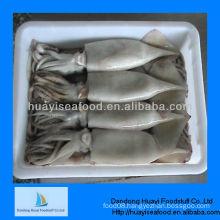 frozen squid seafood