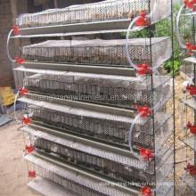 new design automatic quail cage