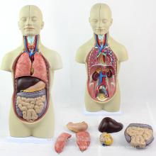 TUNK ANATOMIE 12012 Mini 12 Teile 45 cm Sexless Torso Puppe Menschlichen Organen Modell