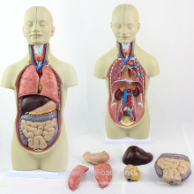TUNK ANATOMY 12012 Mini 12 piezas 45cm Sexless Torso Doll Human Organs Model