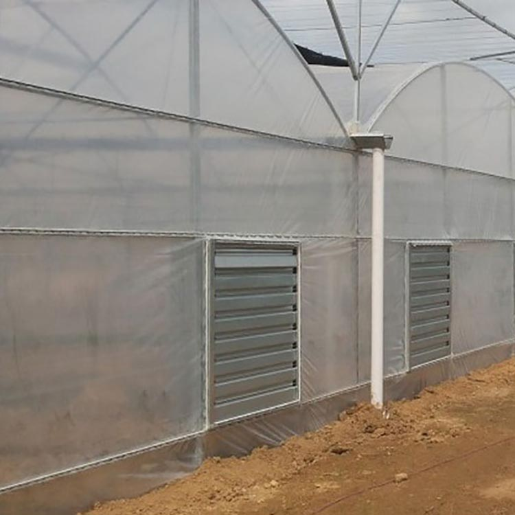Tunnel tropical plastic film grape production greenhouse