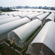 Single Span Plastic Film Greenhouse For Plant