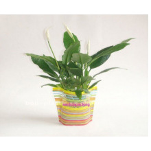 Plastic Foldable Flower Vase