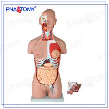 PNT-0301 85 cm 28 partes modelo de torso humano, espalda abierta, doble sexo