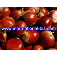 Chestnut Shell Brown