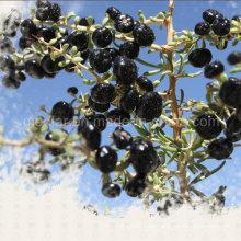 Baya de Goji negra de alta calidad de Ninglar del níspero