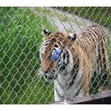 Galvanizado Zoo esgrima malla (TS-J79)