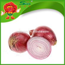 Fabricante de cebola de alta qualidade Cebola vermelha natural grande