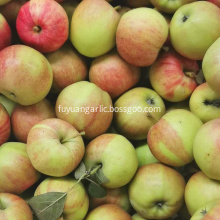 High quality red delicious fresh gala apple