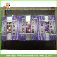 Fresh Red Garlic 5.0cm 10kg/Carton