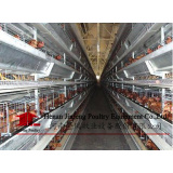 H-Type Chicken Cage (9BDT-3402)