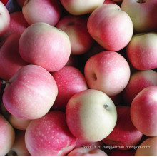 Новая обрезка красного гала-яблока Применить сладкое и сочное