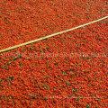 Ningxia Orgânica Bagas Vermelhas Goji - 100% Super Raw