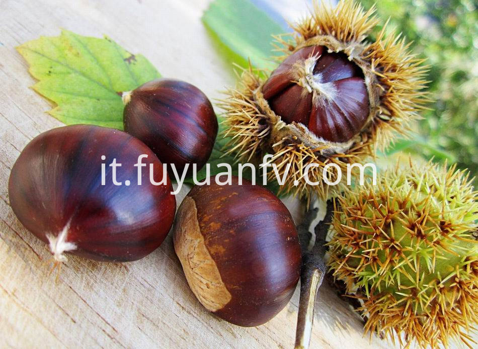 Fresh Chestnut 8