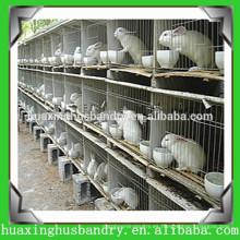 Jaula de pollo y jaula de conejo y jaula de paloma