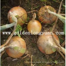 Chinesische frische gelbe Zwiebel