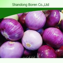 Cebolla fresca en China con calidad superior