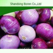 Cebola fresca na China com qualidade superior