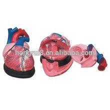 Медицинское пластическое человеческое сердце Jumbo Heart Анатомическая модель