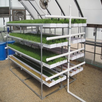 Hydroponic Fodder ProFeed Growing System