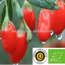 Sun Dried Organic Goji Berries