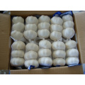 Export New Crop Fresh Pure White Garlic