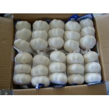 Ajo blanco puro chino de buena calidad