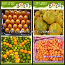 Nennen Sie alle Zitrusfrüchte / Mandarine Orange / frische Orange / Liste der gelben Früchte