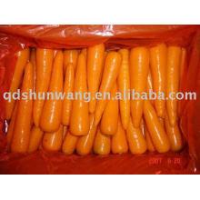 2015 Zanahorias chinas de buena calidad en buen gusto