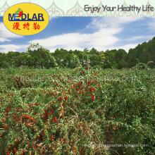 Medlar Ningxia Dried Goji Berry Medlar