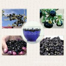 Mispel-Barbary-Wolfberry-Frucht-organische schwarze Goji-Beere
