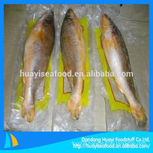 high demand from foreign market for frozen yellow croaker