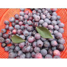 IQF Морозильная / сублимированная органическая черника Zl-001 5