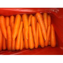 Прямые поставки свежей моркови нового сезона в 2016 году