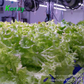 Patent Vertical Farming Plant Grow Lamp Hydroponic Full Spectrum Horticulture Light LED Bar