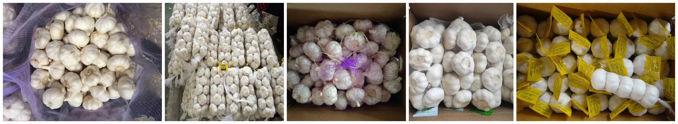 garlic packing