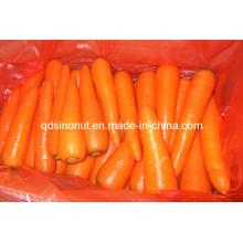 Nouvelle carotte fraîche (SML 2L 3L)