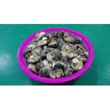Cogumelo de Shiitake liso secado