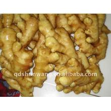 chinese yong laiwu anqiu fresh ginger